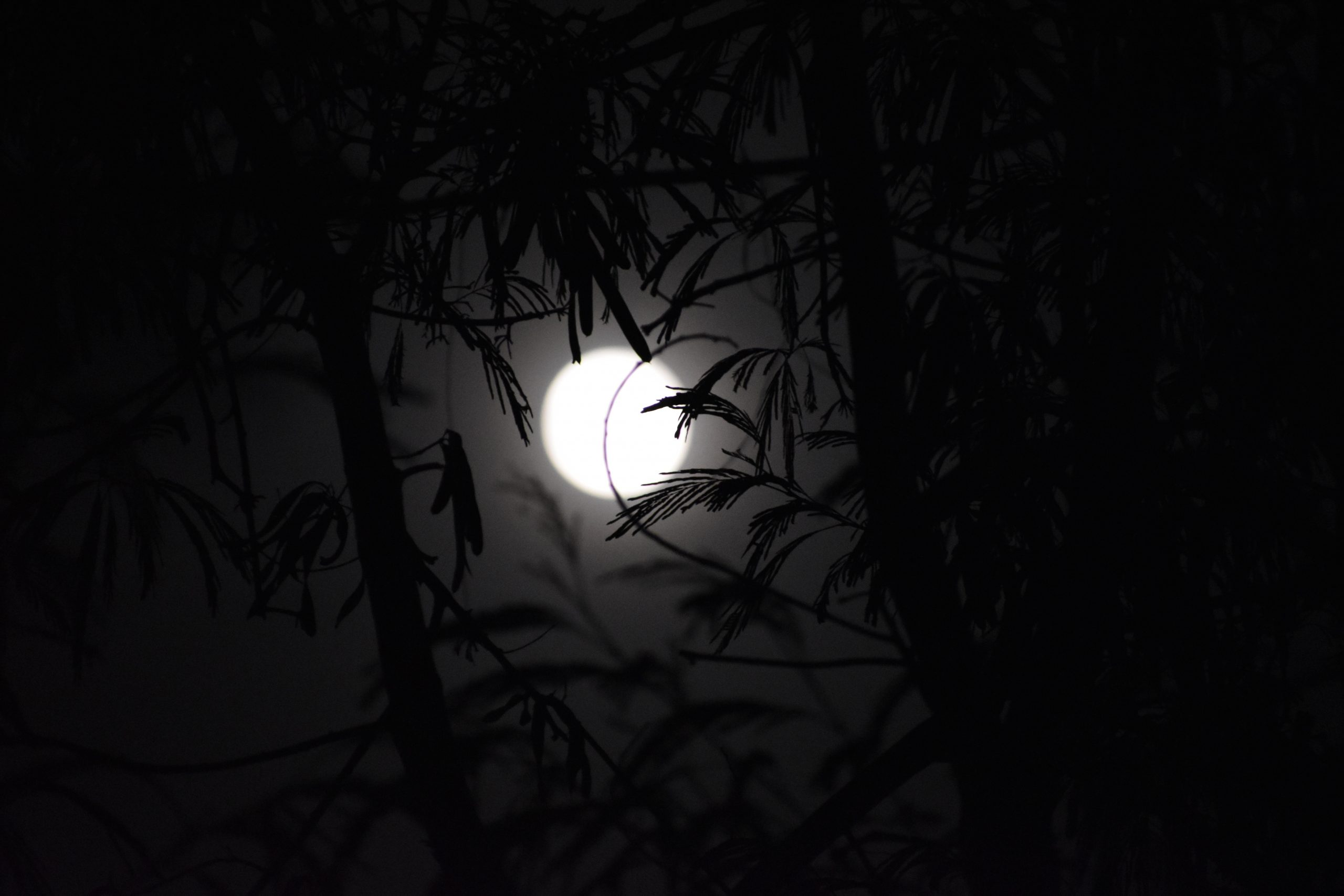 leaves with moon background illustration